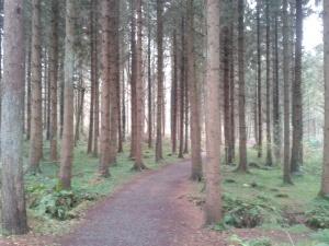 Portglenone Forest, Co. Antrim