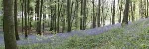 Portglenone Forest (pic by Scott Peddie)